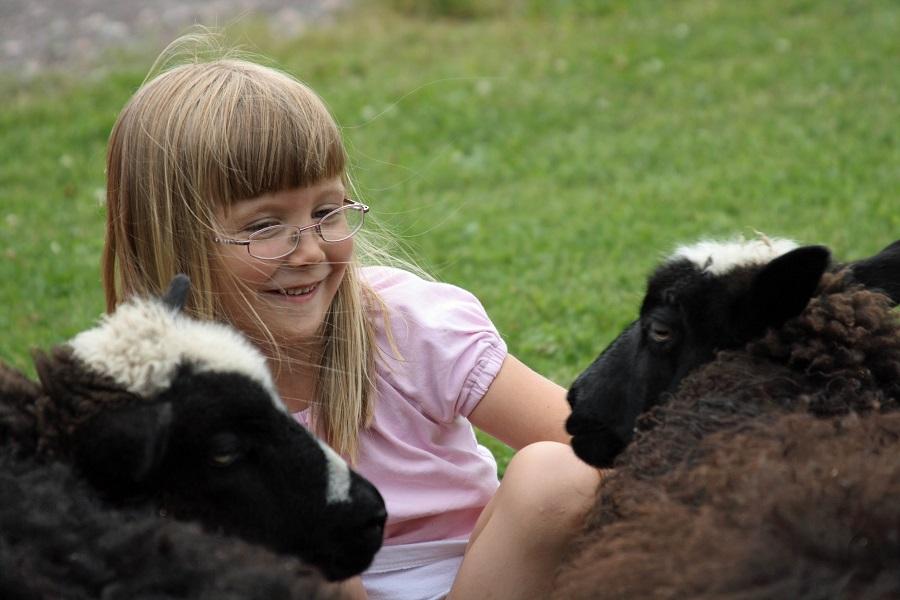Paluu-Vanhemmuus-Ulkomailla-asumisen-vaikutus-Päivi-Arvonen-Tyttö-ja-lampaat.jpg